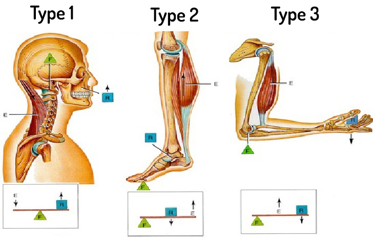 NASM 6th Edition chapter 5 - Human Movement Science 2
