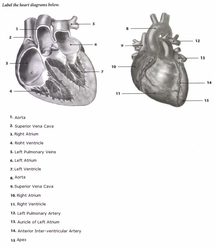 ISSA Unit 2 - Basic anatomy and physiology 1