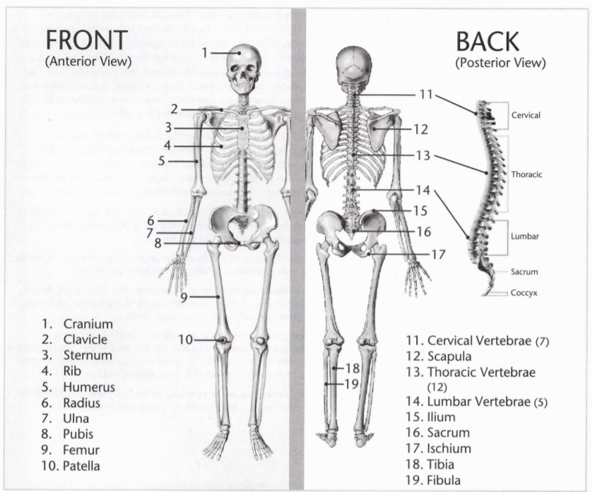 ISSA Unit 3 - Musculoskeletal anatomy and physiology 1