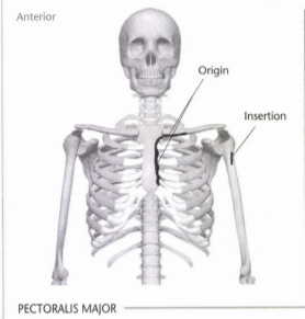 ISSA Unit 3 - Musculoskeletal anatomy and physiology 12