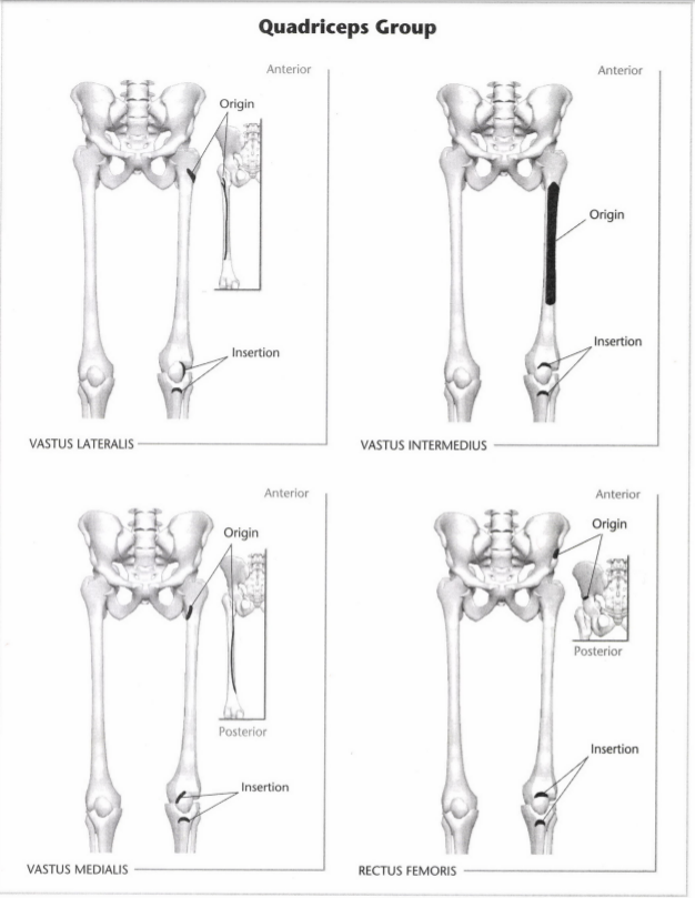 ISSA Unit 3 - Musculoskeletal anatomy and physiology 17