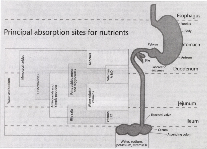 ISSA Unit 18 - Nutritional psychology 5