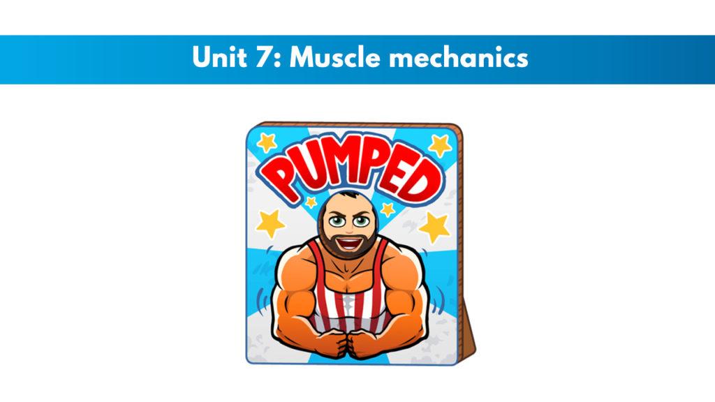 ISSA Unit 7 - Muscle mechanics