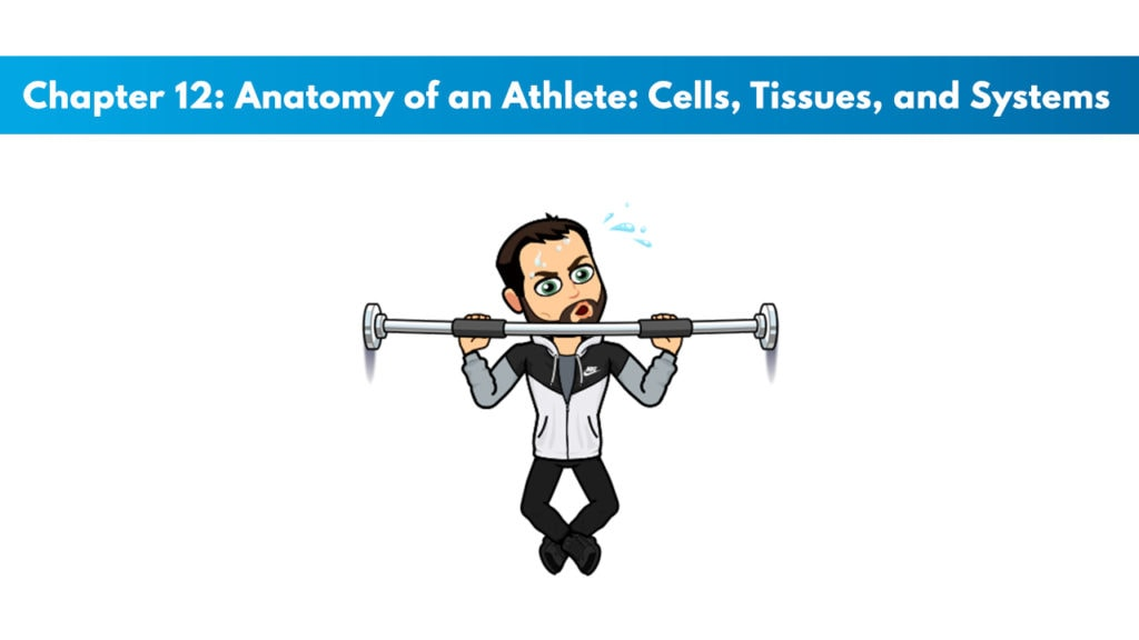 ISSA SN Chapter 12: Anatomy of an Athlete: Cells, Tissues, and Systems